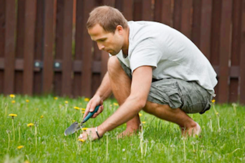 lawn-care-sunshine-coast