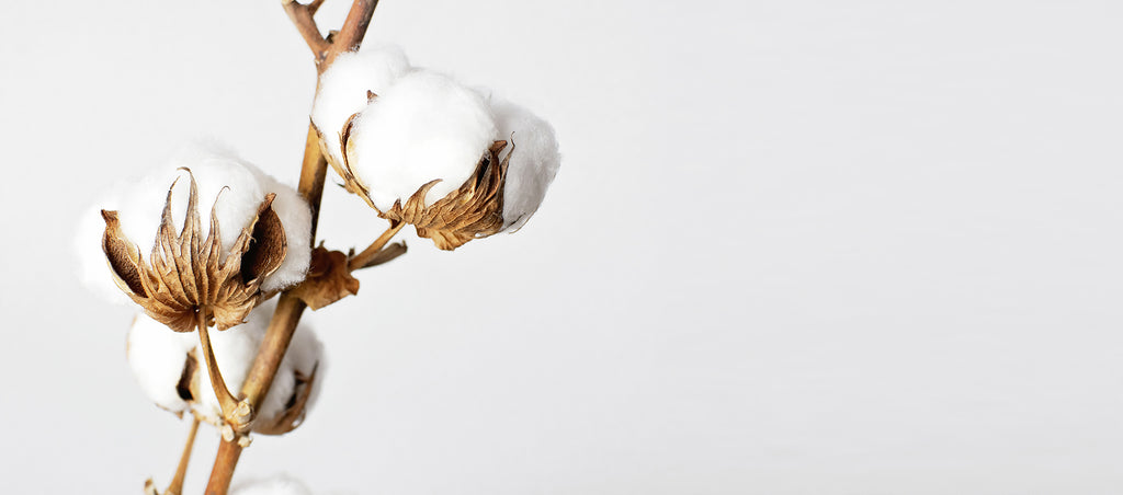 organic cotton for biodegradable sneakers