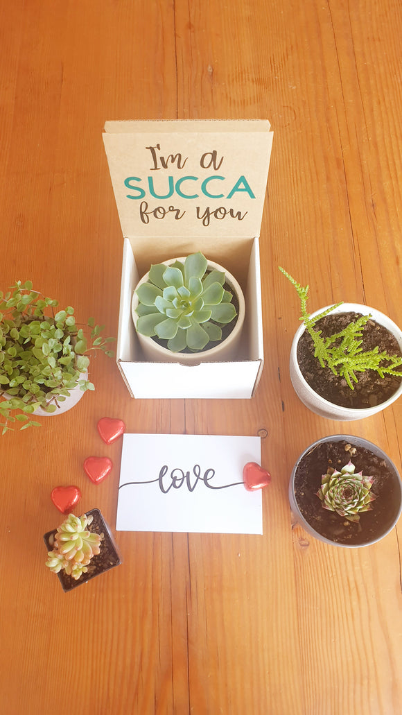 Valentines Day Succulents