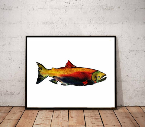 """Coho salmon"" fish illustration print"