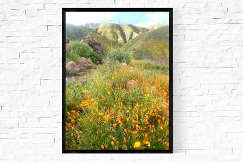 "'superbloom valley"" fine art nature print"