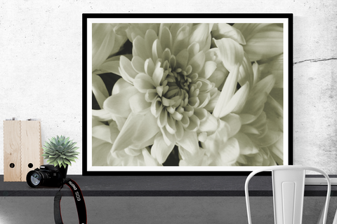 """white chrysanthemum"" flower photography print"