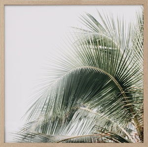 Palm Obsession
