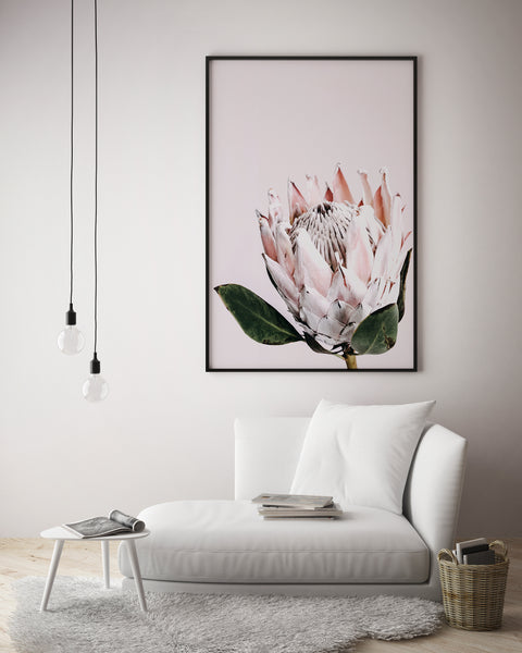 Pretty Protea - Blush Background