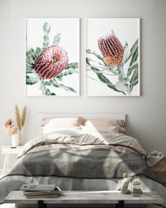 Vintage Banksia 1 and 2 (both prints)