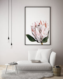Pretty Protea - White Background