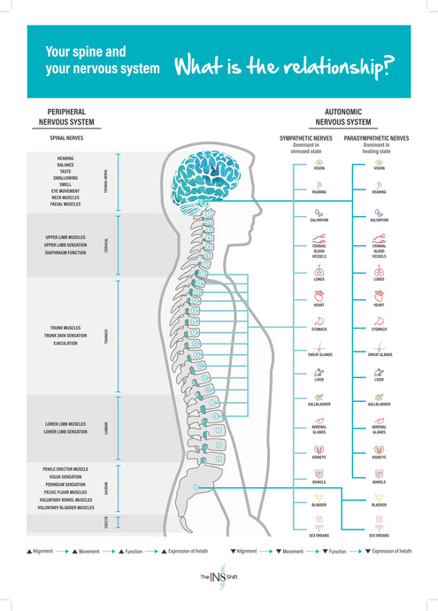 Autonomic and Spinal Nerve Chart