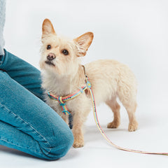 Dog in branded WAHF x BARC Harness