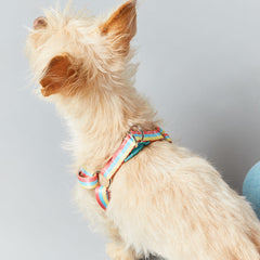 Dog in unbranded WAHF x BARC Harness