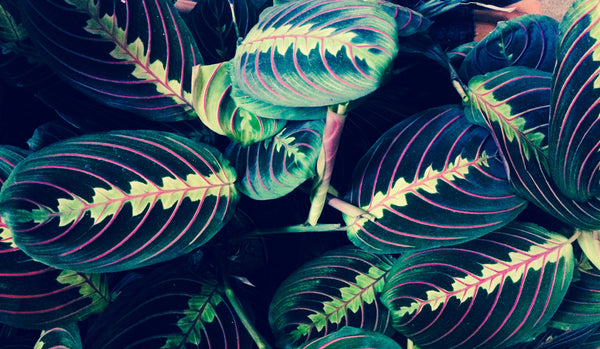 The plant movement: why houseplants are important