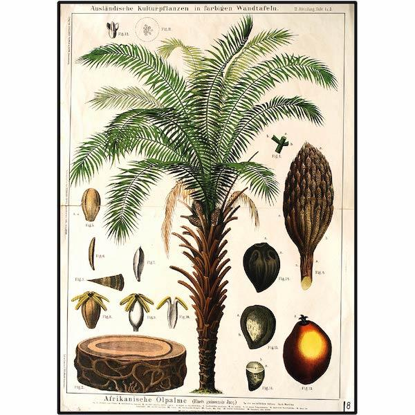 African-Palm-tree-Botanical-Print-Cuemars