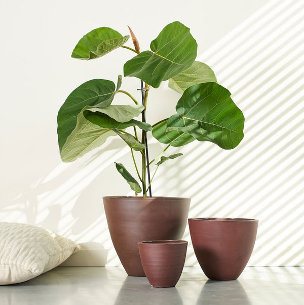 medium cone shaped geometric planter with plants  in a warm bordeaux colour