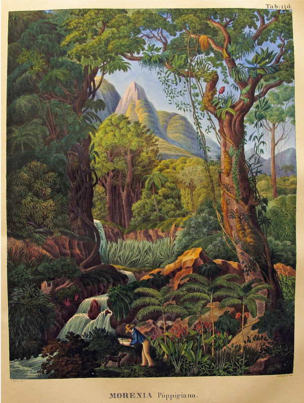 Jungle Landscape - Botanical Print