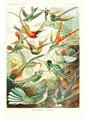 Birds in Nature - Botanical Print