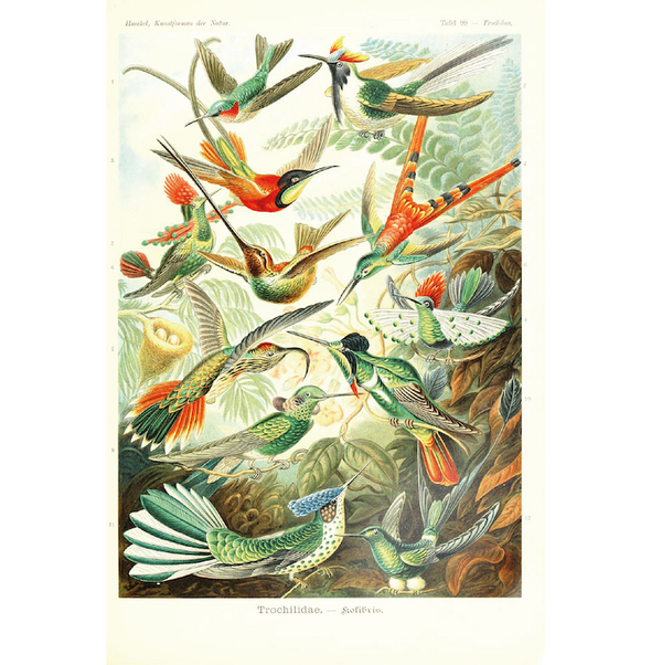 Botanical-print-birds-in-nature-bird-print-cuemars