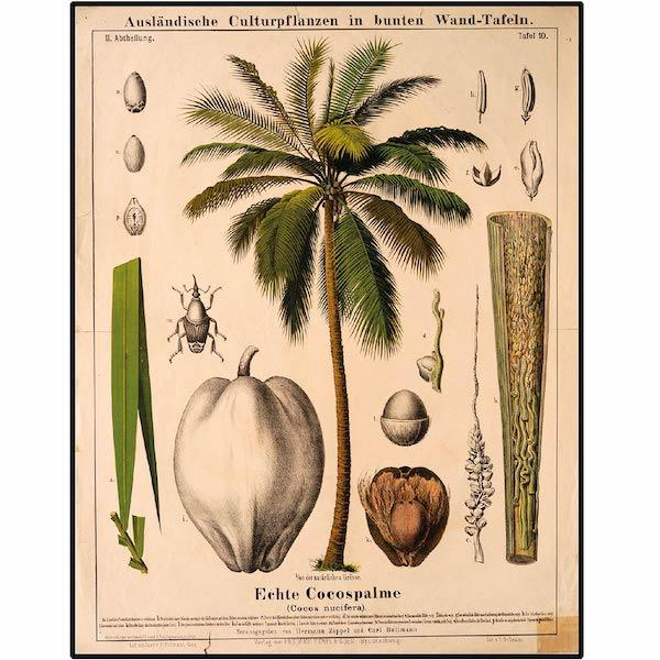Coco-Palm-Tree-Botanical-Print-Cuemars