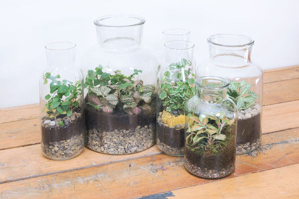 Corporate terrarium masterclass Workshop