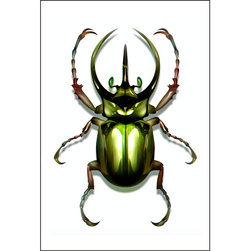 Dark Green Beetle - Insect Print