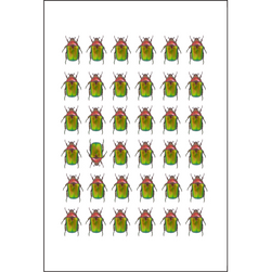Multiple Green Beetles - Insect Print