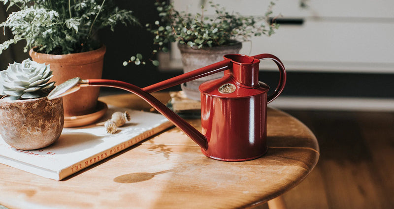Lifestyle picture of Haws handmade metal indoor watering can in burgundy with brass rose and Haws emblem in brass