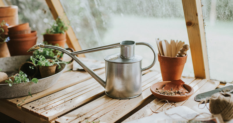 Lifestyle picture of Haws handmade metal indoor watering can in galvanised with brass rose and Haws emblem in brass