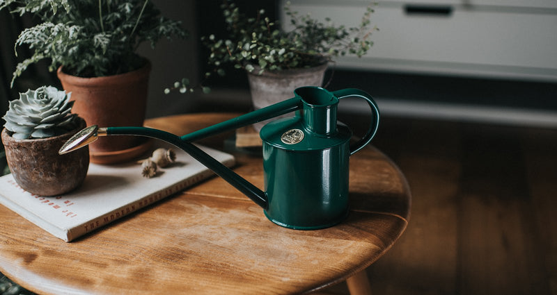 Lifestyle picture of Haws handmade metal indoor watering can in green with brass rose and Haws emblem in brass