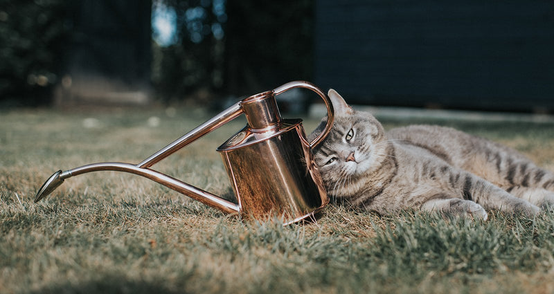 lifestyle picture of handmade watering can in solid copper by British family business Haws, available to purchase at Cuemars