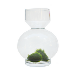 Marimo Moss Balls at Lowa Vase to create an indoor water garden