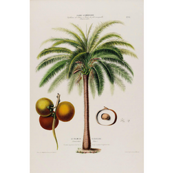 Palm Tree - Botanical Print