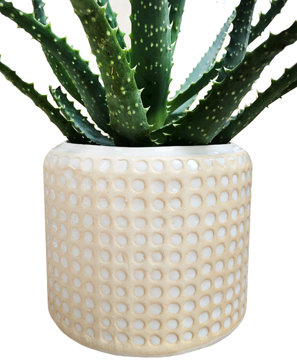 dotty ceramic plant pot with plant London plant shop cuemars