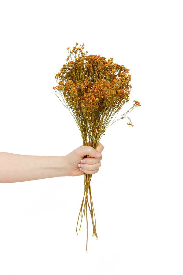 Burnt Orange dried broom bloom bouquet available at cuemars.com in different colours