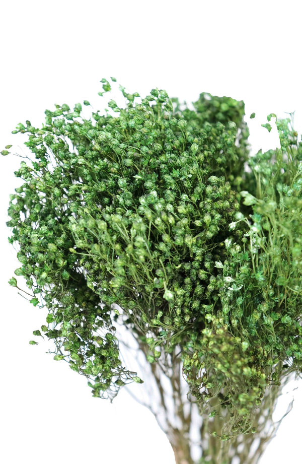 Green dried broom bloom bouquet available at cuemars.com in different colours