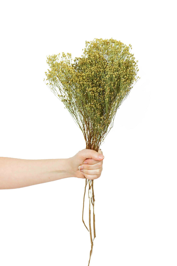 Natural dried broom bloom bouquet available at cuemars.com in different colours