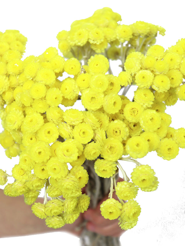 Dried Immortelle Yellow Bunch | Dried Flower Bouquets at Cuemars London