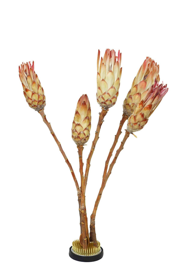 Bunch of 6 Dried Protea Compacta (Pink) displayed on a metallic kenzan stem holder with brass pins and a black rubber.