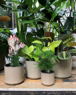 four sizes dusk ceramic planters london cuemars