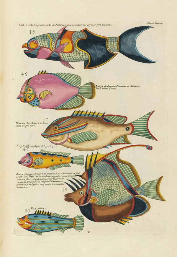 Aquatic Fish Study by Louis Renard - A3 Vintage Aquatic Bathroom Prints available at Cuemars London