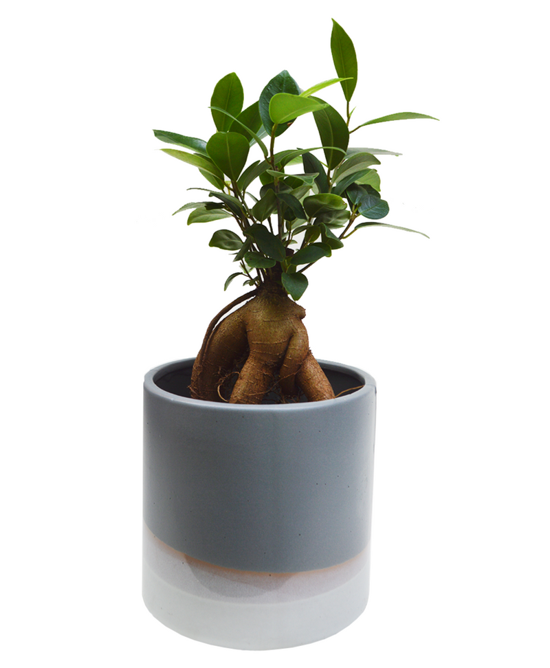 Ombre effect handmade ceramic planter available in cuemars
