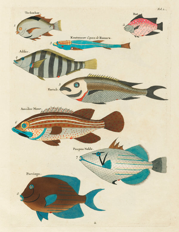Aquatic Fish Study Multi by Louis Renard - A3 Botanical Print available at Cuemars London
