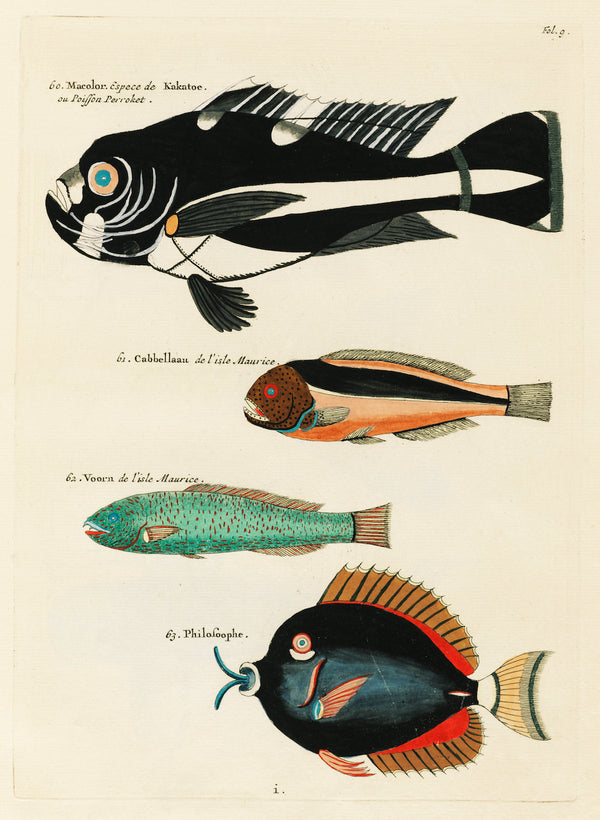 Aquatic Fish Study by Louis Renard - A3 Botanical Print available at Cuemars London