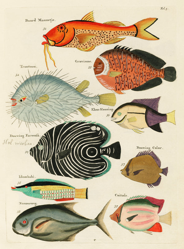 Aquatic Fish Study IV by Louis Renard - A3 Vintage Aquatic Print available at Cuemars London