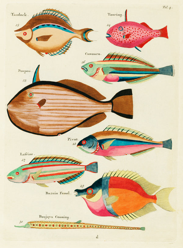 Vintage Botanical Aquatic Study of Louis Renard's Fantastical Fish. A3 Prints available at Cuemars.
