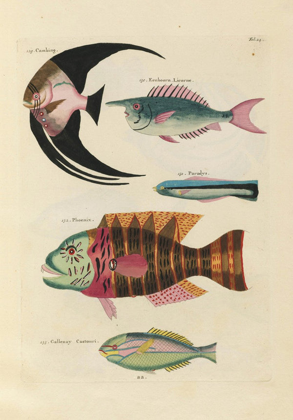 Aquatic Fish Study by Louis Renard - A3 Vintage Aquatic Print available at Cuemars London