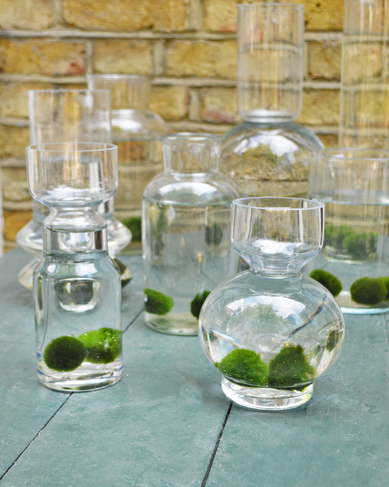 Marimo Moss Balls in a geometric Vase to create an indoor water garden