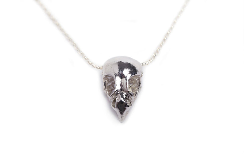 Handmade statement necklace made out of sterling silver and an ethically sourced bird of prey skull cast