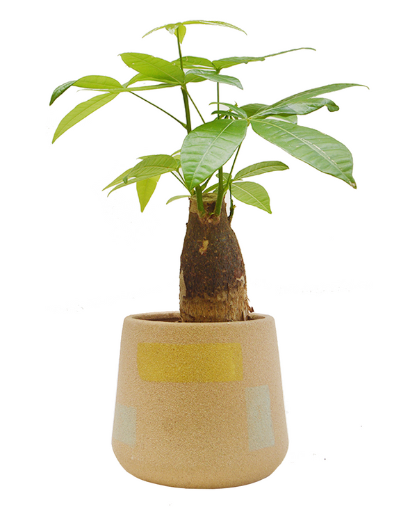 Mint blue and yellow textured ceramic planter 16cm diameter available at Cuemars