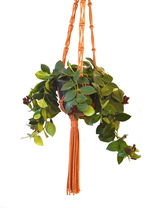 Sustainable cotton macramé plant hanger - Terracotta