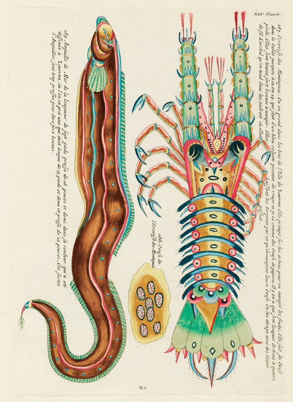 Vintage Aquatic Study of a Crustacean and Eel belonging to Louis Renard's Fantastical Fish. A3 Wall Prints and Framing available at Cuemars UK.