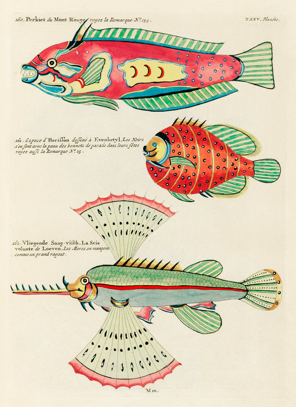 Vintage Aquatic Study of Fantastical Fish by Louis Renard. A3 Wall Prints and Framing available at Cuemars.