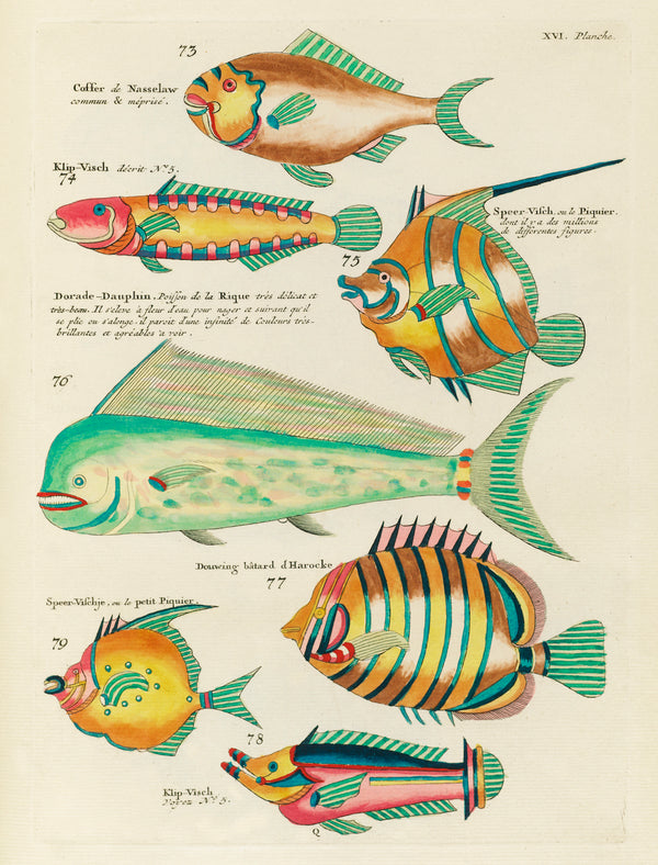 Vintage Aquatic Study of Fantastical Fish by Louis Renard. A3 Wall Prints and Framing available at Cuemars UK.